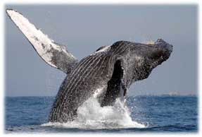 Whale Watching - Los Cabos DMC